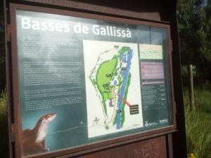 Gallissa 3