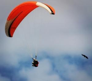 volant com voltors 3