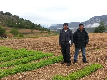 Conreu Quinoa (2)