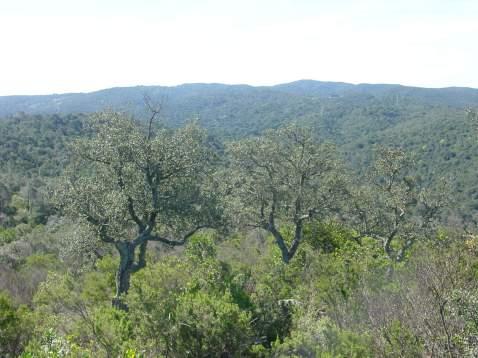 Boscos can Puig (1)